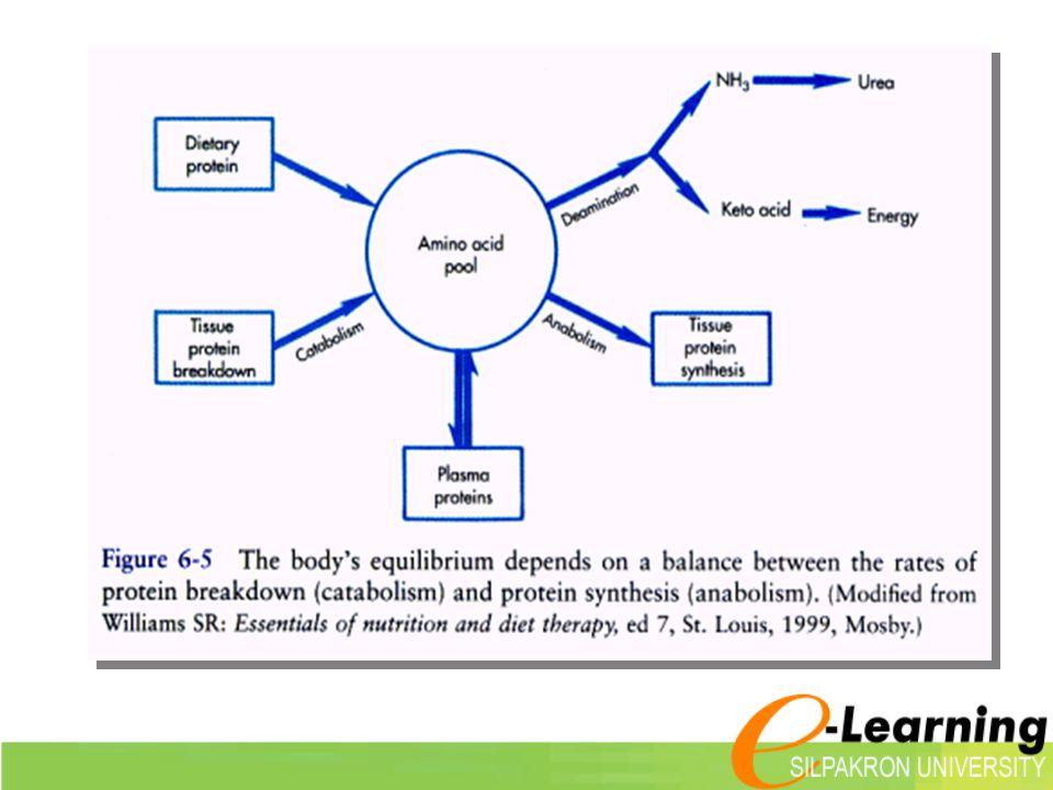 การย่อยอาหาร ประเภทโปรตีน