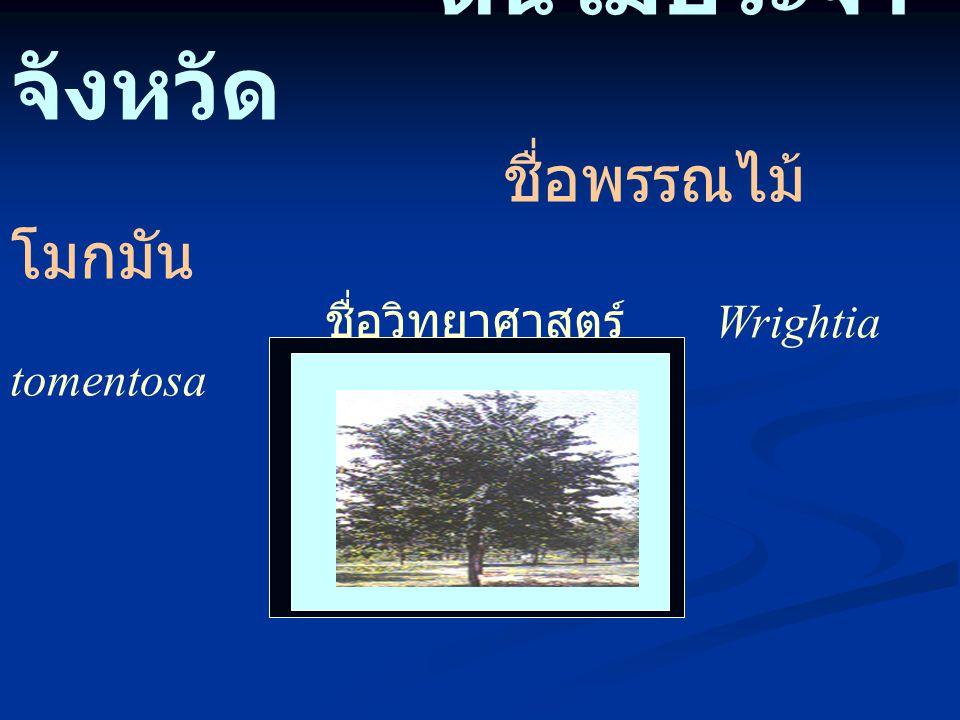 ต้นไม้ประจำ จังหวัด ชื่อพรรณไม้ โมกมัน ชื่อวิทยาศาสตร์ Wrightia tomentosa