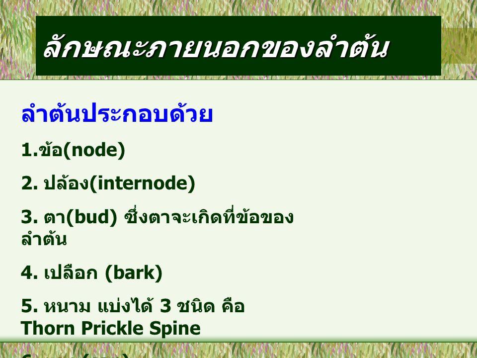 ลักษณะภายนอกของลำต้น ลำต้นประกอบด้วย 1. ข้อ (node) 2. ปล้อง (internode) 3. ตา (bud) ซึ่งตาจะเกิดที่ข้อของ ลำต้น 4. เปลือก (bark) 5. หนาม แบ่งได้ 3 ชนิ