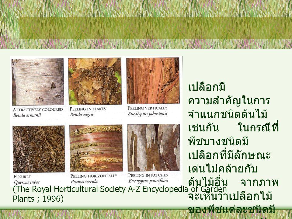 เปลือกมี ความสำคัญในการ จำแนกชนิดต้นไม้ เช่นกัน ในกรณีที่ พืชบางชนิดมี เปลือกที่มีลักษณะ เด่นไม่คล้ายกับ ต้นไม้อื่น จากภาพ จะเห็นว่าเปลือกไม้ ของพืชแต