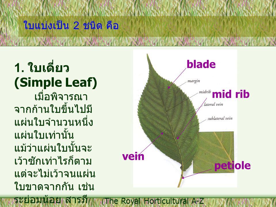 ใบแบ่งเป็น 2 ชนิด คือ 1. ใบเดี่ยว (Simple Leaf) เมื่อพิจารณา จากก้านใบขึ้นไปมี แผ่นใบจำนวนหนึ่ง แผ่นใบเท่านั้น แม้ว่าแผ่นใบนั้นจะ เว้าซักเท่าไรก็ตาม แ