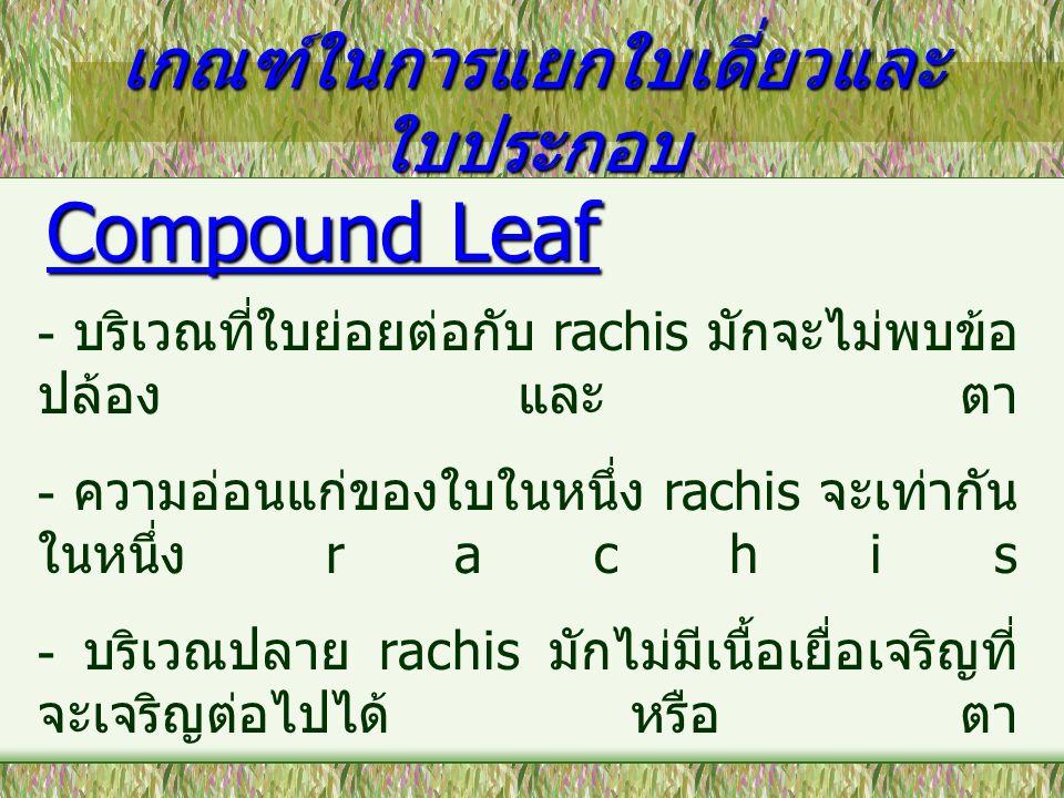 เกณฑ์ในการแยกใบเดี่ยวและ ใบประกอบ Compound Leaf - บริเวณที่ใบย่อยต่อกับ rachis มักจะไม่พบข้อ ปล้อง และ ตา - ความอ่อนแก่ของใบในหนึ่ง rachis จะเท่ากัน ใ