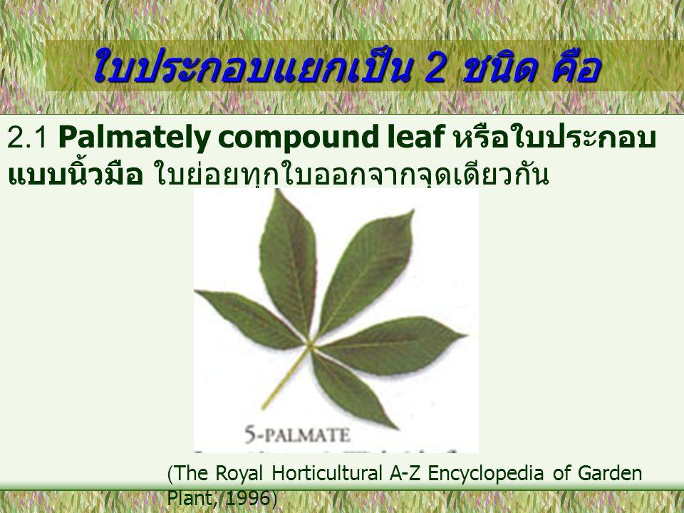 ใบประกอบแยกเป็น 2 ชนิด คือ 2.1 Palmately compound leaf หรือใบประกอบ แบบนิ้วมือ ใบย่อยทุกใบออกจากจุดเดียวกัน (The Royal Horticultural A-Z Encyclopedia