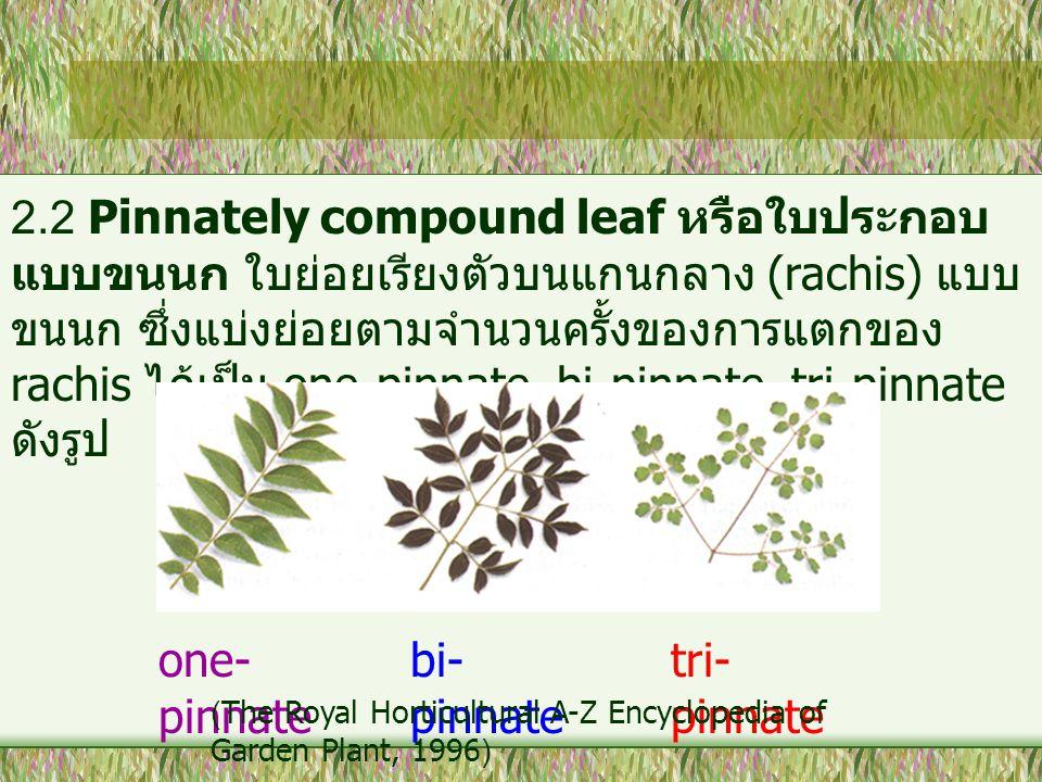 2.2 Pinnately compound leaf หรือใบประกอบ แบบขนนก ใบย่อยเรียงตัวบนแกนกลาง (rachis) แบบ ขนนก ซึ่งแบ่งย่อยตามจำนวนครั้งของการแตกของ rachis ได้เป็น one-pi