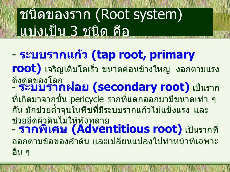 ชนิดของราก (Root system) แบ่งเป็น 3 ชนิด คือ - ระบบรากแก้ว (tap root, primary root) เจริญเติบโตเร็ว ขนาดค่อนข้างใหญ่ งอกตามแรง ดึงดูดของโลก - ระบบรากฝ
