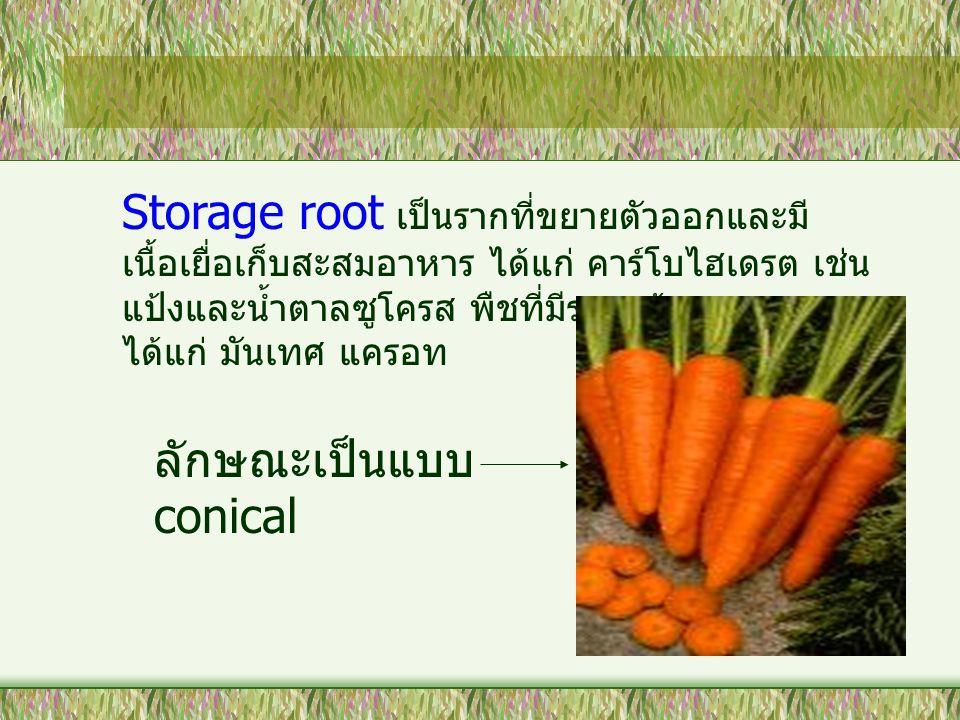 Storage root เป็นรากที่ขยายตัวออกและมี เนื้อเยื่อเก็บสะสมอาหาร ได้แก่ คาร์โบไฮเดรต เช่น แป้งและน้ำตาลซูโครส พืชที่มีรากแก้วสะสมอาหาร ได้แก่ มันเทศ แคร