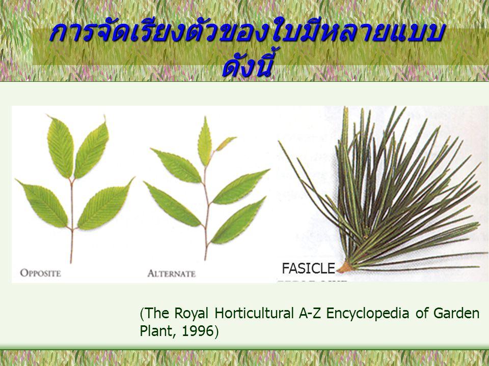 การจัดเรียงตัวของใบมีหลายแบบ ดังนี้ FASICLE (The Royal Horticultural A-Z Encyclopedia of Garden Plant, 1996)