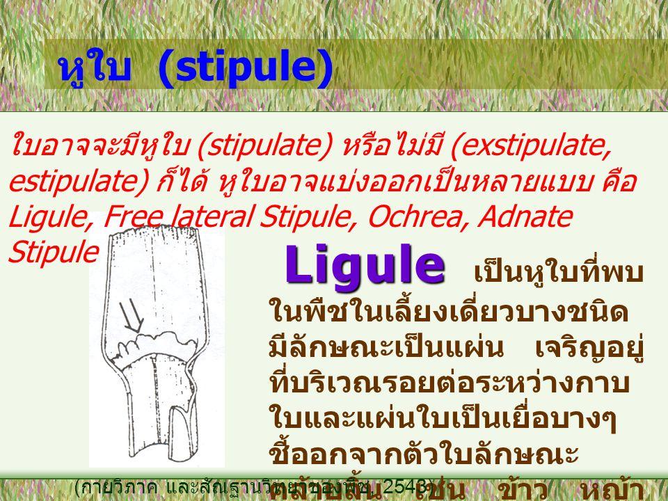 หูใบ (stipule) ใบอาจจะมีหูใบ (stipulate) หรือไม่มี (exstipulate, estipulate) ก็ได้ หูใบอาจแบ่งออกเป็นหลายแบบ คือ Ligule, Free lateral Stipule, Ochrea,