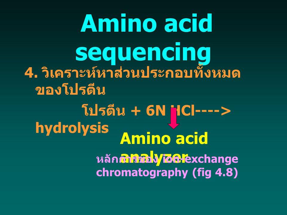  Amino acid sequencing 4. วิเคราะห์หาส่วนประกอบทั้งหมด ของโปรตีน โปรตีน + 6N HCl----> hydrolysis Amino acid analyzer หลักการของ ion-exchange chromato
