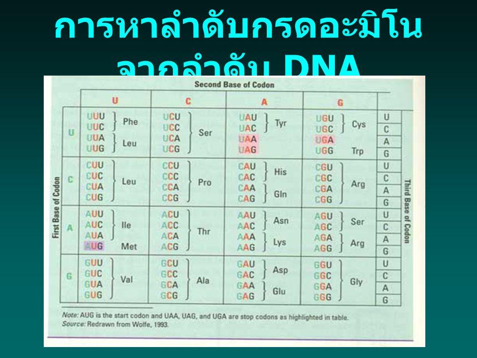 การหาลำดับกรดอะมิโน จากลำดับ DNA