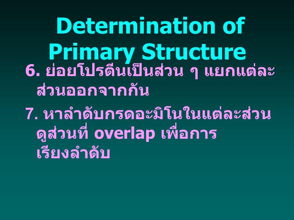 Determination of Primary Structure 6. ย่อยโปรตีนเป็นส่วน ๆ แยกแต่ละ ส่วนออกจากกัน 7. หาลำดับกรดอะมิโนในแต่ละส่วน ดูส่วนที่ overlap เพื่อการ เรียงลำดับ