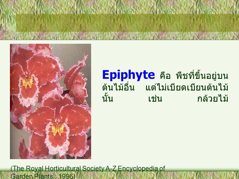 Epiphyte คือ พืชที่ขึ้นอยู่บน ต้นไม้อื่น แต่ไม่เบียดเบียนต้นไม้ นั้น เช่น กล้วยไม้ (The Royal Horticultural Society A-Z Encyclopedia of Garden Plants