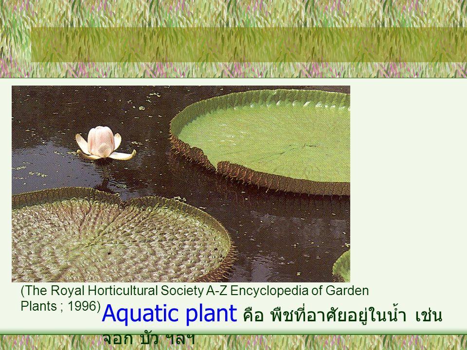 Aquatic plant คือ พืชที่อาศัยอยู่ในน้ำ เช่น จอก บัว ฯลฯ (The Royal Horticultural Society A-Z Encyclopedia of Garden Plants ; 1996)