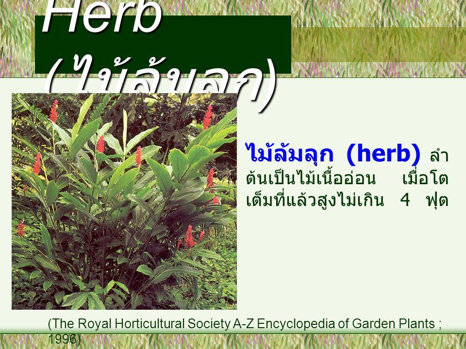 Herb ( ไม้ล้มลุก ) ไม้ล้มลุก (herb) ลำ ต้นเป็นไม้เนื้ออ่อน เมื่อโต เต็มที่แล้วสูงไม่เกิน 4 ฟุต (The Royal Horticultural Society A-Z Encyclopedia of Ga