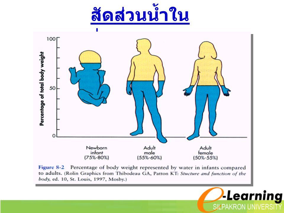  ความต้องการของ ร่างกาย ( ตาม RDIs) 1.0 - 1.5 มิลลิลิตร / อาหาร 1 คาลอรี = 2 litres / 2000 kcal = 8 glasses / day Water