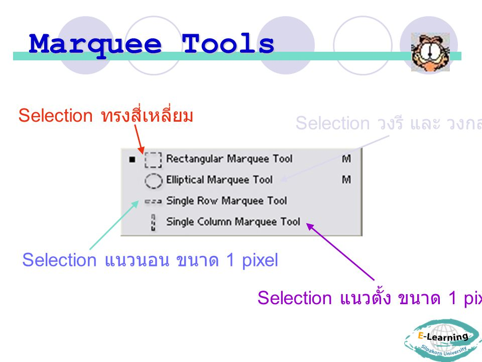 Marquee Tools Selection ทรงสี่เหลี่ยม Selection วงรี และ วงกลม Selection แนวนอน ขนาด 1 pixel Selection แนวตั้ง ขนาด 1 pixel