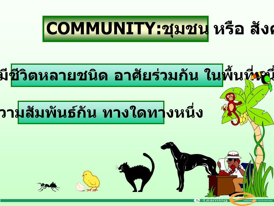 COMMUNITY: ชุมชน หรือ สังคม กลุ่มสิ่งมีชีวิตหลายชนิด อาศัยร่วมกัน ในพื้นที่หนึ่ง มีความสัมพันธ์กัน ทางใดทางหนึ่ง