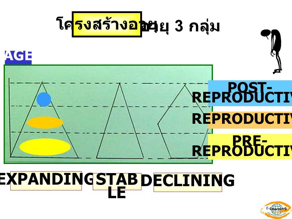 โครงสร้างอายุ POST- REPRODUCTIVE PRE- REPRODUCTIVE AGE EXPANDING STAB LE DECLINING อายุ 3 กลุ่ม