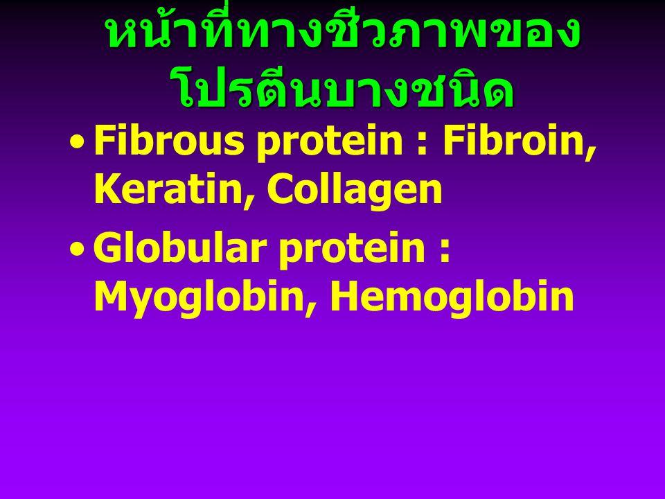 หน้าที่ทางชีวภาพของ โปรตีนบางชนิด Fibrous protein : Fibroin, Keratin, Collagen Globular protein : Myoglobin, Hemoglobin