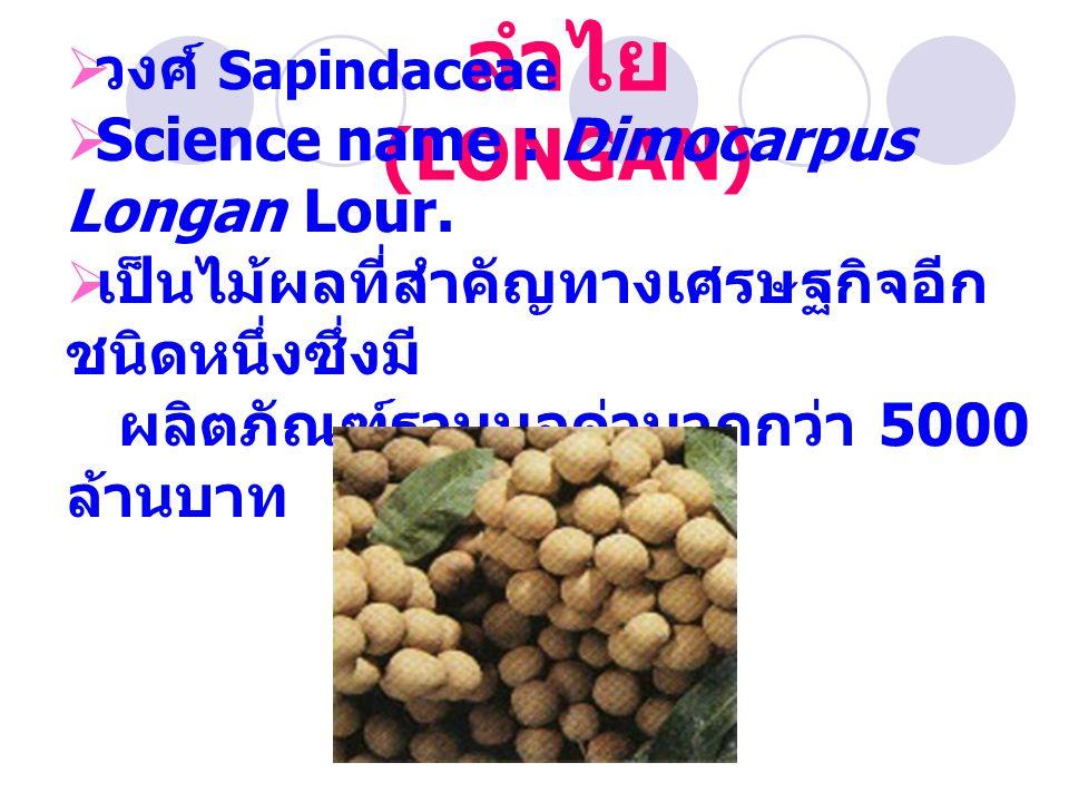 ลำไย (LONGAN)  วงศ์ Sapindaceae  Science name : Dimocarpus Longan Lour.  เป็นไม้ผลที่สำคัญทางเศรษฐกิจอีก ชนิดหนึ่งซึ่งมี ผลิตภัณฑ์รวมมูลค่ามากกว่า