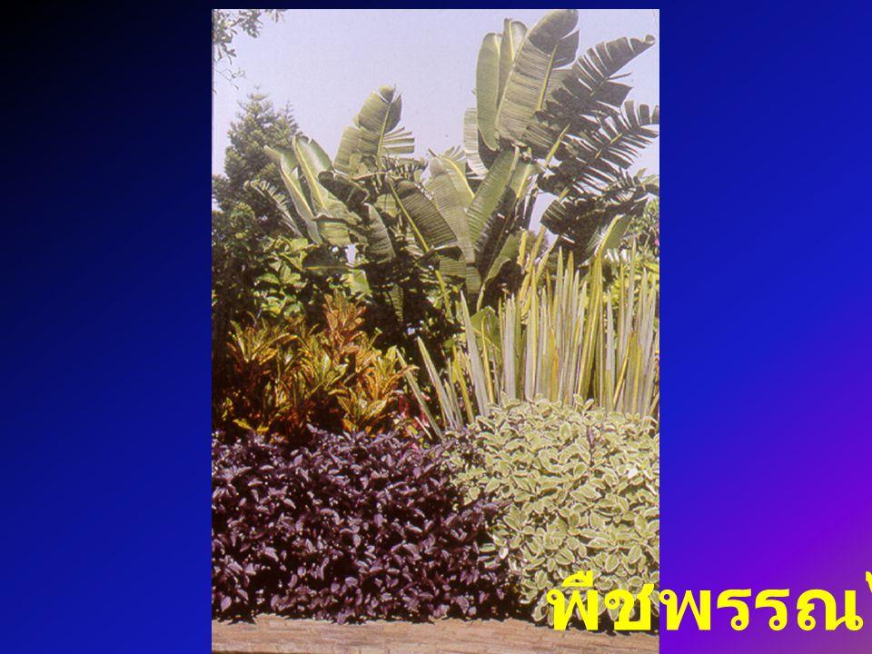 พืชพรรณไม้