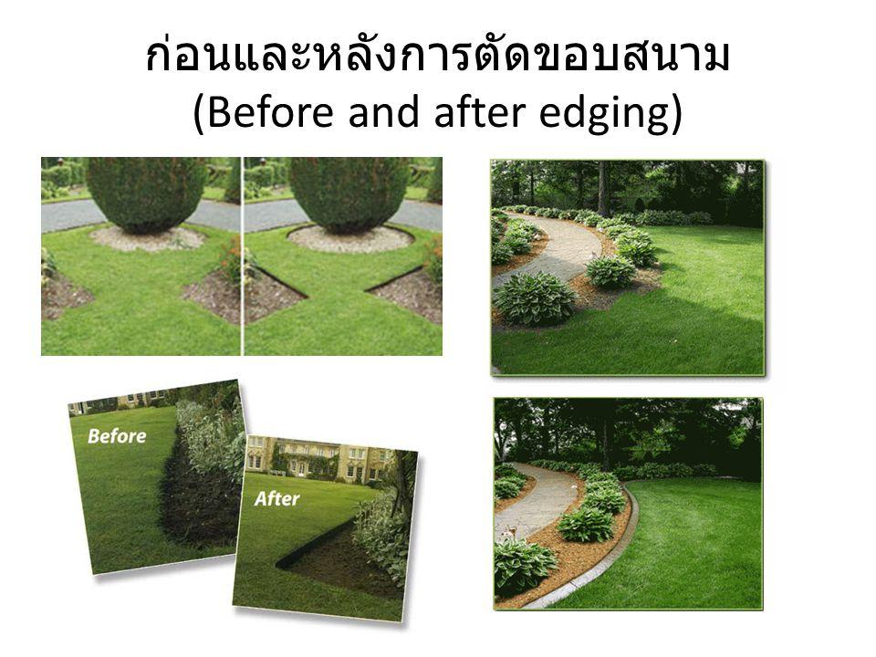 ก่อนและหลังการตัดขอบสนาม (Before and after edging)