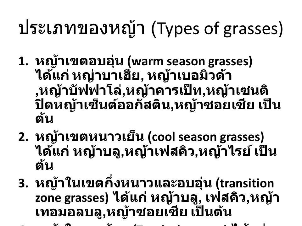 ประเภทของหญ้า (Types of grasses) 1. หญ้าเขตอบอุ่น (warm season grasses) ได้แก่ หญ่าบาเฮีย, หญ้าเบอมิวด้า, หญ้าบัฟฟาโล่, หญ้าคารเป็ท, หญ้าเซนติ ปิดหญ้า