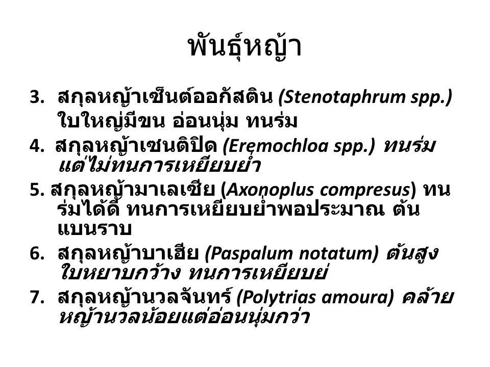 พันธุ์หญ้า 3. สกุลหญ้าเซ็นต์ออกัสติน (Stenotaphrum spp.) ใบใหญ่มีขน อ่อนนุ่ม ทนร่ม 4. สกุลหญ้าเซนติปิด (Eremochloa spp.) ทนร่ม แต่ไม่ทนการเหยียบย่ำ 5.