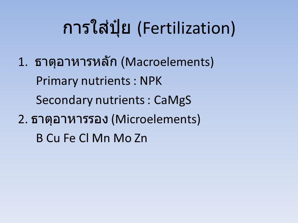 การใส่ปุ๋ย (Fertilization) 1. ธาตุอาหารหลัก (Macroelements) Primary nutrients : NPK Secondary nutrients : CaMgS 2. ธาตุอาหารรอง (Microelements) B Cu F