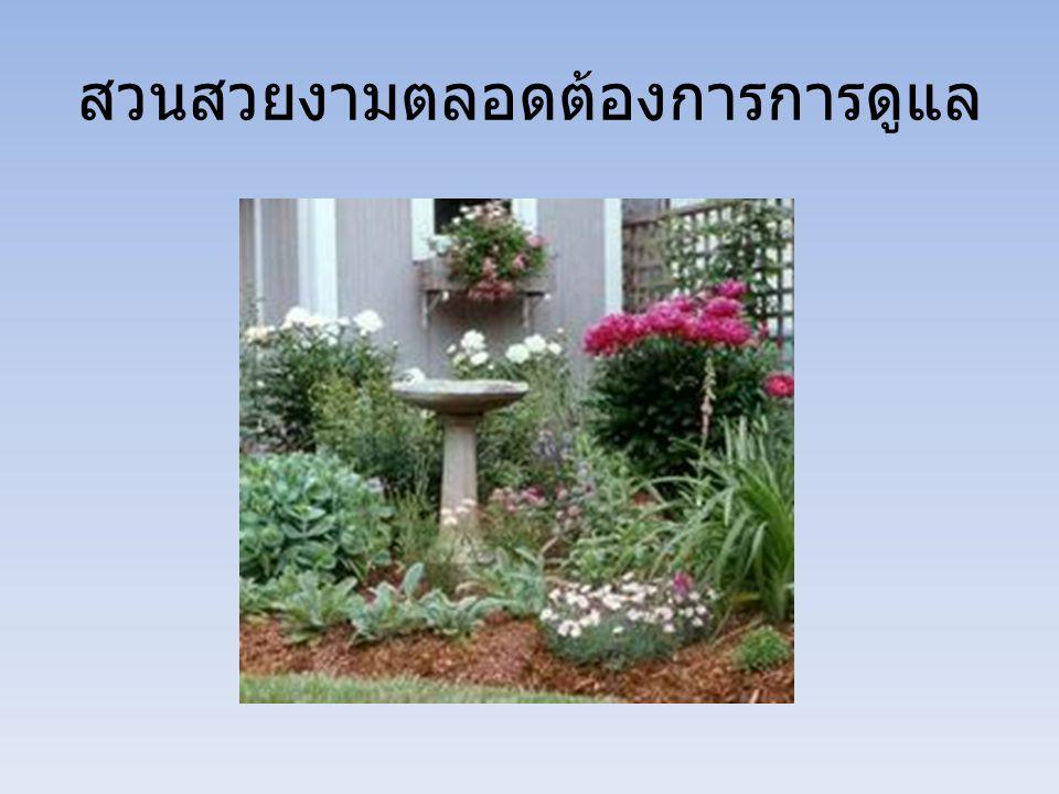การใส่ปุ๋ย (Fertilization) 1.