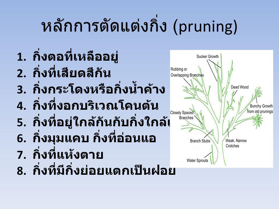 หลักการตัดแต่งกิ่ง (pruning) 1. กิ่งตอที่เหลืออยู่ 2. กิ่งที่เสียดสีกัน 3. กิ่งกระโดงหรือกิ่งน้ำค้าง 4. กิ่งที่งอกบริเวณโคนต้น 5. กิ่งที่อยู่ใกล้กันกั