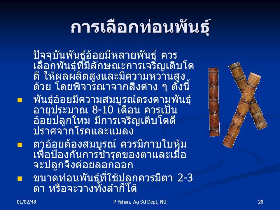 01/02/48 26P Yuhun, Ag Sci Dept, NU การเลือกท่อนพันธุ์ ปัจจุบันพันธุ์อ้อยมีหลายพันธุ์ ควร เลือกพันธุ์ที่มีลักษณะการเจริญเติบโต ดี ให้ผลผลิตสูงและมีควา