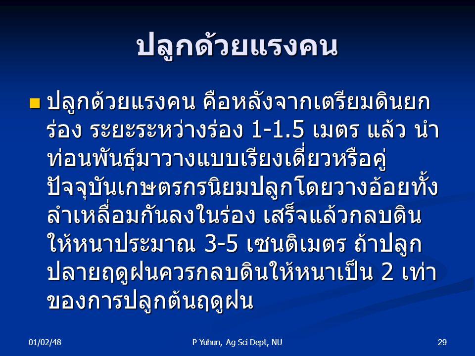 01/02/48 29P Yuhun, Ag Sci Dept, NU ปลูกด้วยแรงคน ปลูกด้วยแรงคน คือหลังจากเตรียมดินยก ร่อง ระยะระหว่างร่อง 1-1.5 เมตร แล้ว นำ ท่อนพันธุ์มาวางแบบเรียงเ