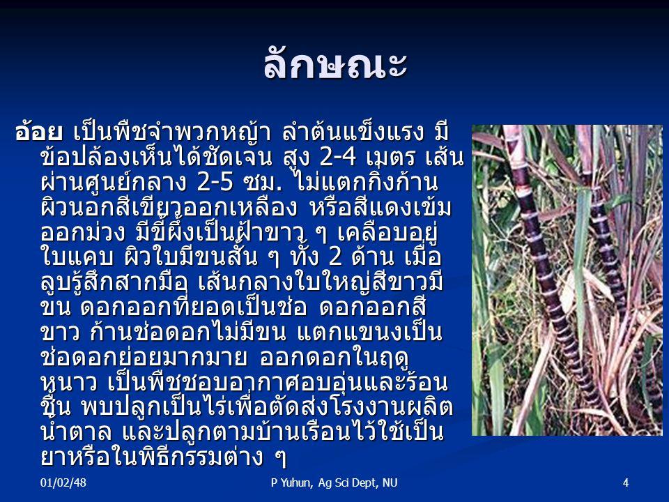 01/02/48 4P Yuhun, Ag Sci Dept, NU ลักษณะ อ้อย เป็นพืชจำพวกหญ้า ลำต้นแข็งแรง มี ข้อปล้องเห็นได้ชัดเจน สูง 2-4 เมตร เส้น ผ่านศูนย์กลาง 2-5 ซม. ไม่แตกกิ