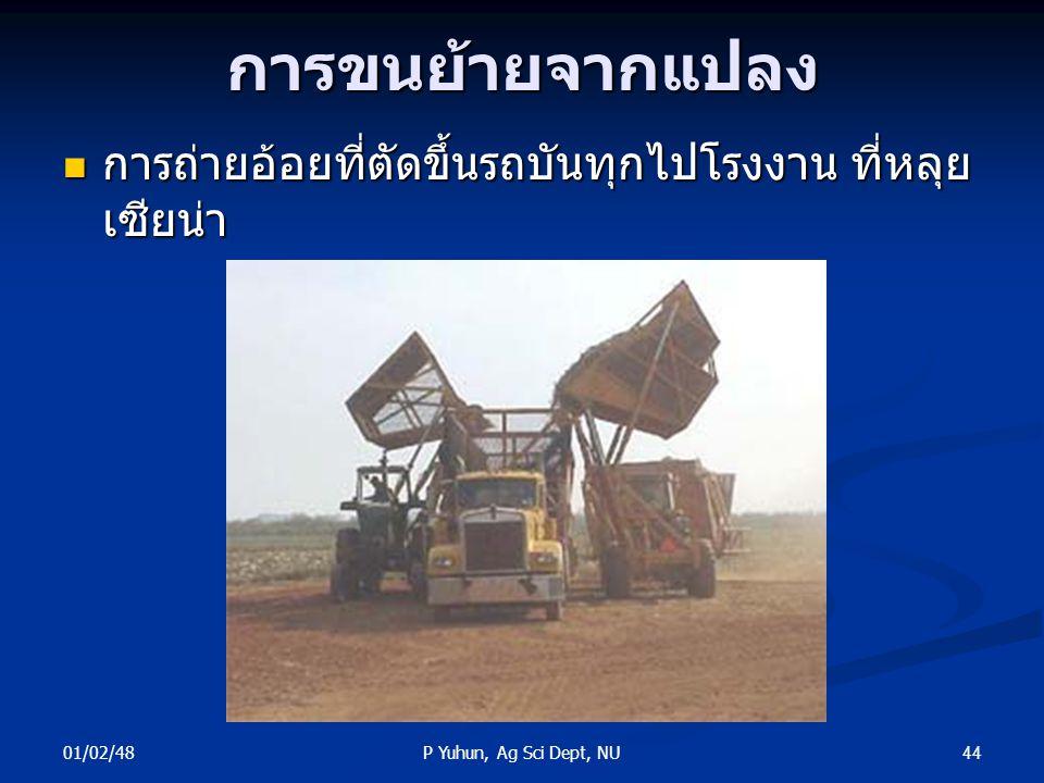 01/02/48 44P Yuhun, Ag Sci Dept, NUการขนย้ายจากแปลง การถ่ายอ้อยที่ตัดขึ้นรถบันทุกไปโรงงาน ที่หลุย เซียน่า การถ่ายอ้อยที่ตัดขึ้นรถบันทุกไปโรงงาน ที่หลุ