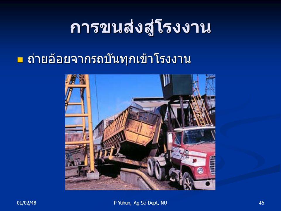 01/02/48 45P Yuhun, Ag Sci Dept, NU การขนส่งสู่โรงงาน ถ่ายอ้อยจากรถบันทุกเข้าโรงงาน ถ่ายอ้อยจากรถบันทุกเข้าโรงงาน