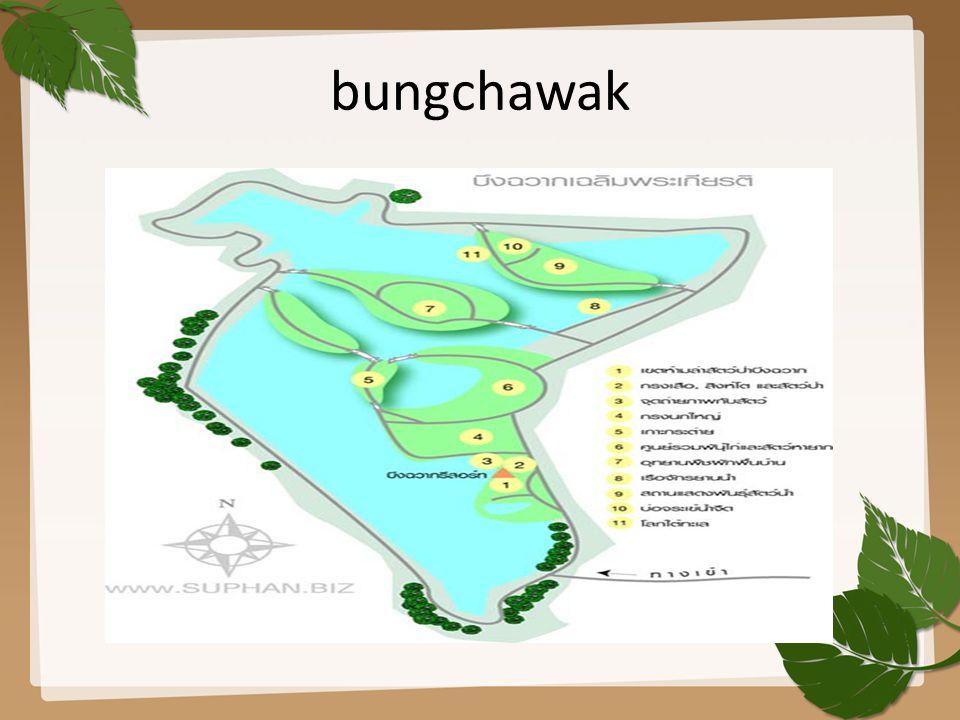 bungchawak