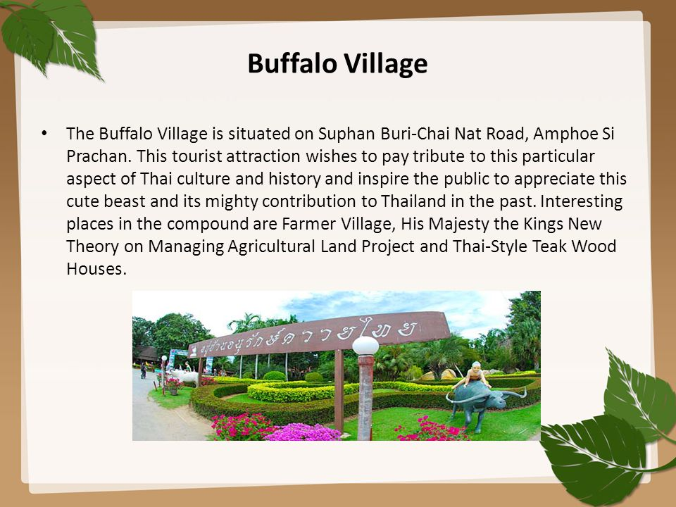 Buffalo Village The Buffalo Village is situated on Suphan Buri-Chai Nat Road, Amphoe Si Prachan. This tourist attraction wishes to pay tribute to this