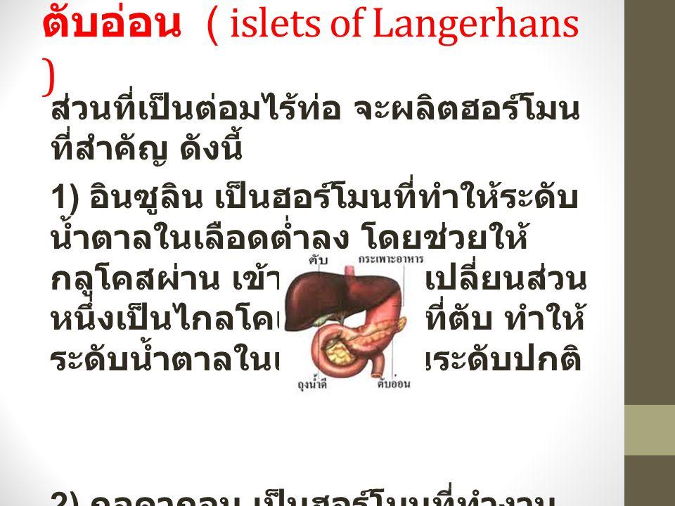 ตับอ่อน ( islets of Langerhans ) ส่วนที่เป็นต่อมไร้ท่อ จะผลิตฮอร์โมน ที่สำคัญ ดังนี้ 1) อินซูลิน เป็นฮอร์โมนที่ทำให้ระดับ น้ำตาลในเลือดต่ำลง โดยช่วยให