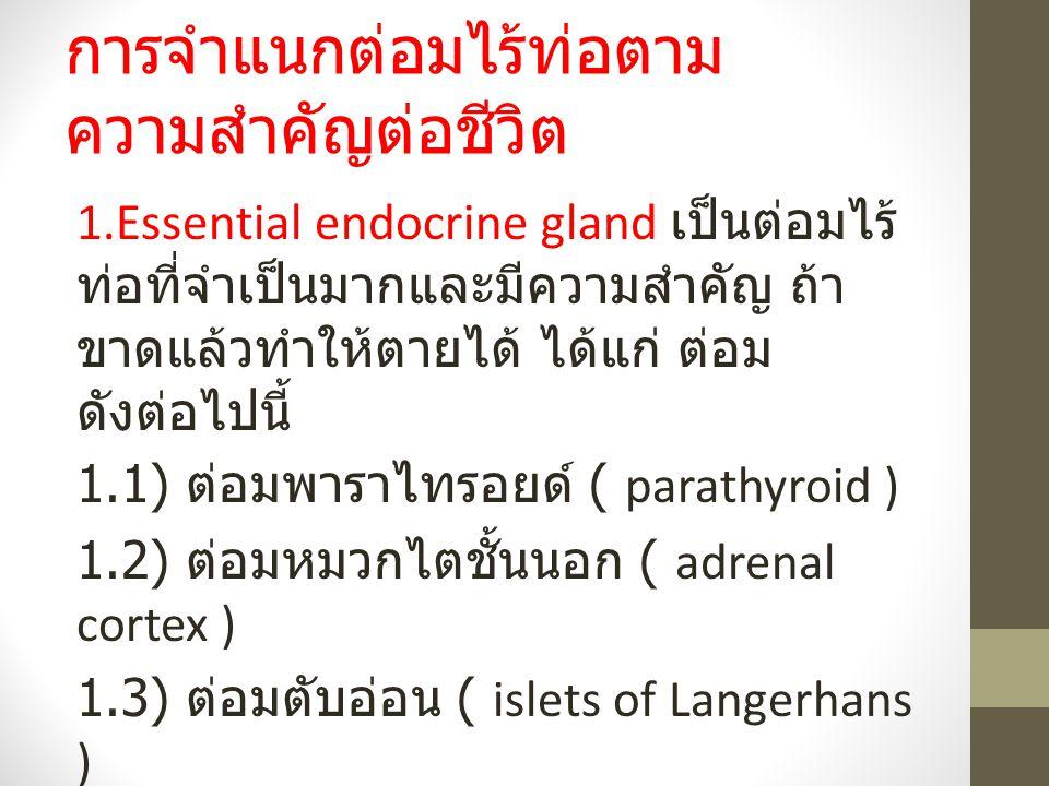 การจำแนกต่อมไร้ท่อตาม ความสำคัญต่อชีวิต 1.Essential endocrine gland เป็นต่อมไร้ ท่อที่จำเป็นมากและมีความสำคัญ ถ้า ขาดแล้วทำให้ตายได้ ได้แก่ ต่อม ดังต่อไปนี้ 1.1) ต่อมพาราไทรอยด์ ( parathyroid ) 1.2) ต่อมหมวกไตชั้นนอก ( adrenal cortex ) 1.3) ต่อมตับอ่อน ( islets of Langerhans )