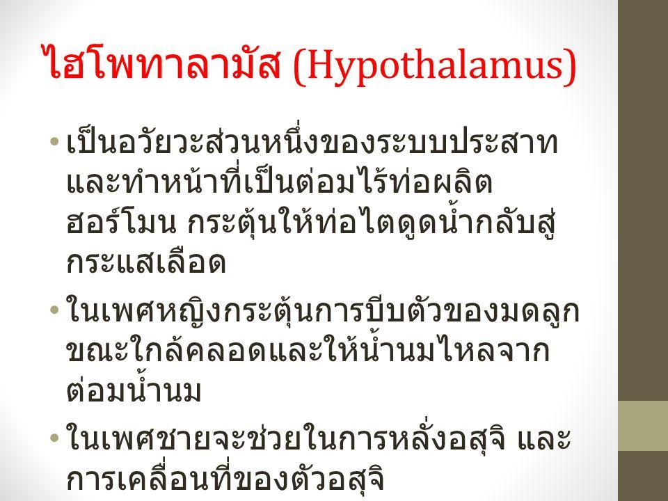 ไฮโพทาลามัส (Hypothalamus) เป็นอวัยวะส่วนหนึ่งของระบบประสาท และทำหน้าที่เป็นต่อมไร้ท่อผลิต ฮอร์โมน กระตุ้นให้ท่อไตดูดน้ำกลับสู่ กระแสเลือด ในเพศหญิงกระตุ้นการบีบตัวของมดลูก ขณะใกล้คลอดและให้น้ำนมไหลจาก ต่อมน้ำนม ในเพศชายจะช่วยในการหลั่งอสุจิ และ การเคลื่อนที่ของตัวอสุจิ