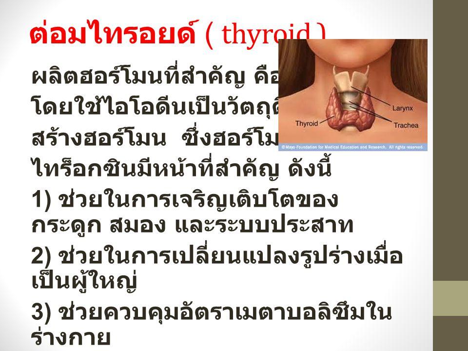 ต่อมไทรอยด์ ( thyroid ) ผลิตฮอร์โมนที่สำคัญ คือ ไทร็อกซิน โดยใช้ไอโอดีนเป็นวัตถุดิบในการ สร้างฮอร์โมน ซึ่งฮอร์โมน ไทร็อกซินมีหน้าที่สำคัญ ดังนี้ 1) ช่