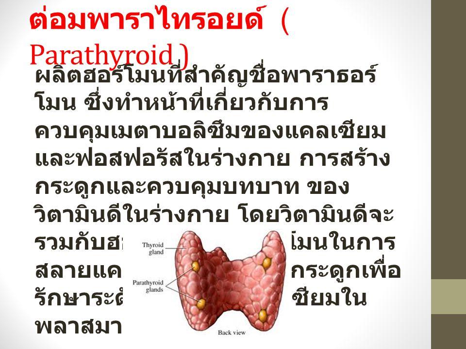 ต่อมพาราไทรอยด์ ( Parathyroid ) ผลิตฮอร์โมนที่สำคัญชื่อพาราธอร์ โมน ซึ่งทำหน้าที่เกี่ยวกับการ ควบคุมเมตาบอลิซึมของแคลเซียม และฟอสฟอรัสในร่างกาย การสร้