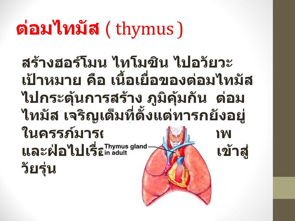 ต่อมไทมัส ( thymus ) สร้างฮอร์โมน ไทโมซิน ไปอวัยวะ เป้าหมาย คือ เนื้อเยื่อของต่อมไทมัส ไปกระตุ้นการสร้าง ภูมิคุ้มกัน ต่อม ไทมัส เจริญเต็มที่ตั้งแต่ทารกยังอยู่ ในครรภ์มารดาและจะเสื่อมสภาพ และฝ่อไปเรื่อยๆตามอายุตั้งแต่เข้าสู่ วัยรุ่น