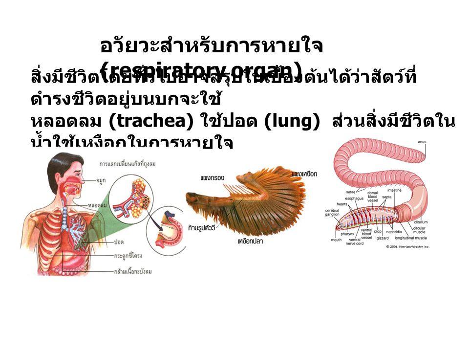 อวัยวะสำหรับการหายใจ (respiratory organ) สิ่งมีชีวิตโดยทั่วไปอาจสรุปในเบื้องต้นได้ว่าสัตว์ที่ ดำรงชีวิตอยู่บนบกจะใช้ หลอดลม (trachea) ใช้ปอด (lung) ส่