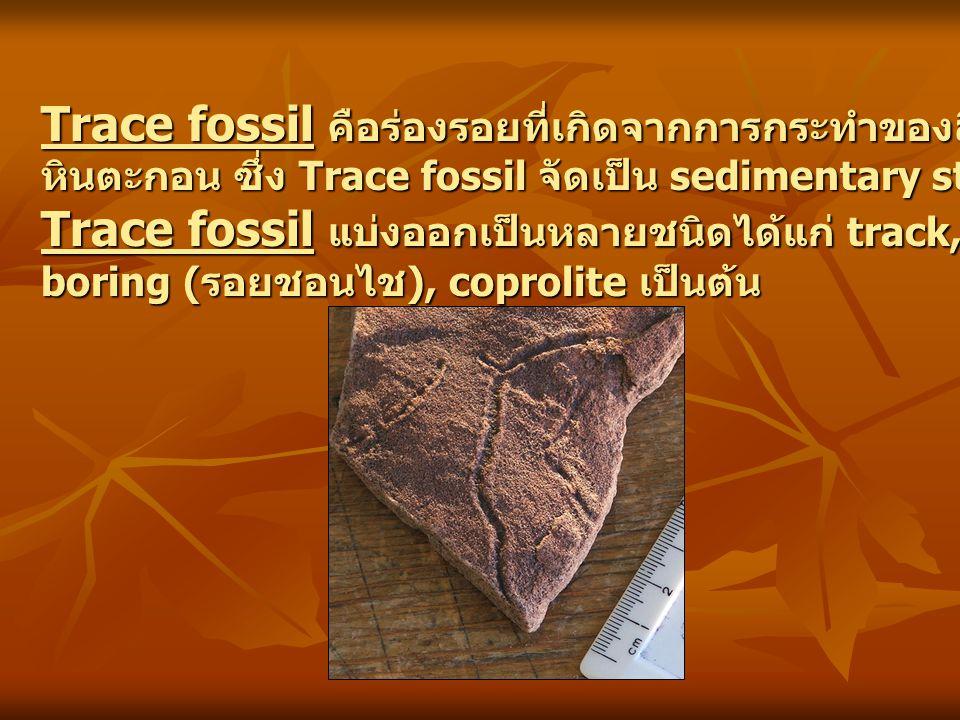 Trace fossil คือร่องรอยที่เกิดจากการกระทำของสิ่งมีชีวิต และถูกเก็บรักษาไว้ใน หินตะกอน ซึ่ง Trace fossil จัดเป็น sedimentary structure ชนิดหนึ่งด้วย Tr