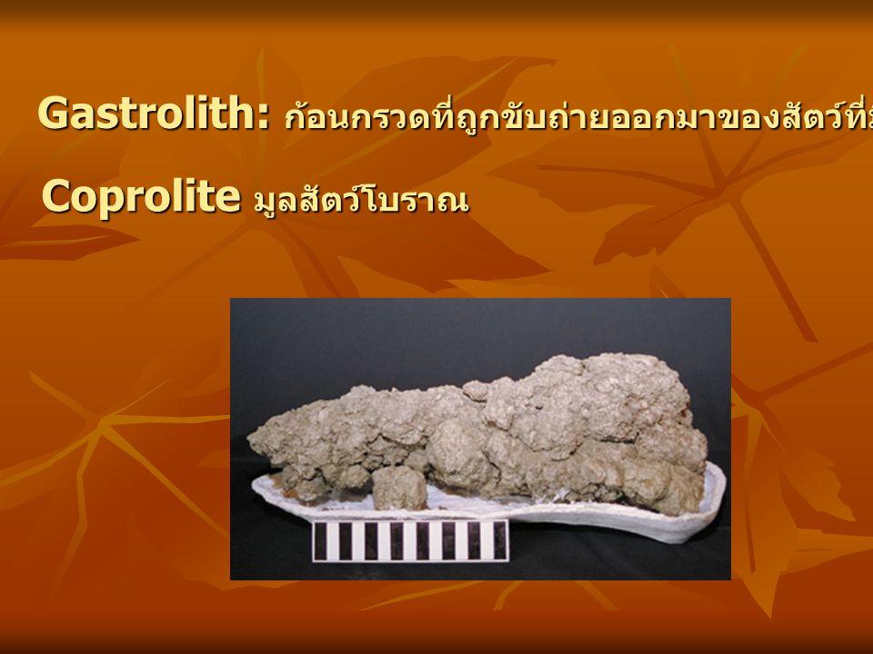 Gastrolith: ก้อนกรวดที่ถูกขับถ่ายออกมาของสัตว์ที่มีกระดูกสันหลัง Coprolite มูลสัตว์โบราณ