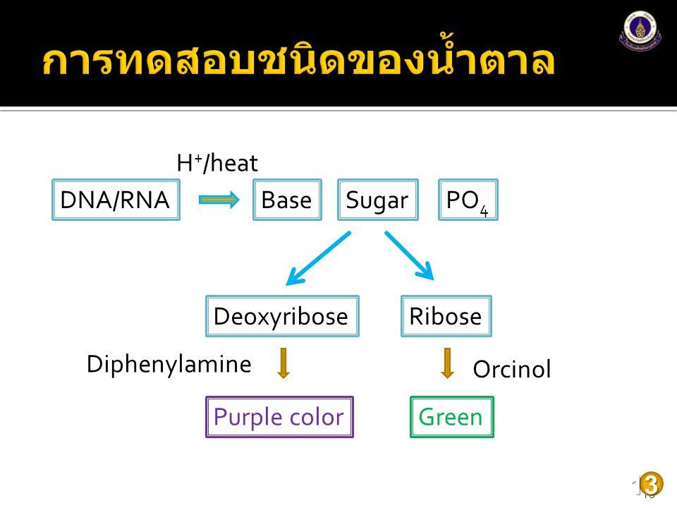 1313 DNA/RNABaseSugarPO 4 DeoxyriboseRibose Purple colorGreen Orcinol Diphenylamine H + /heat