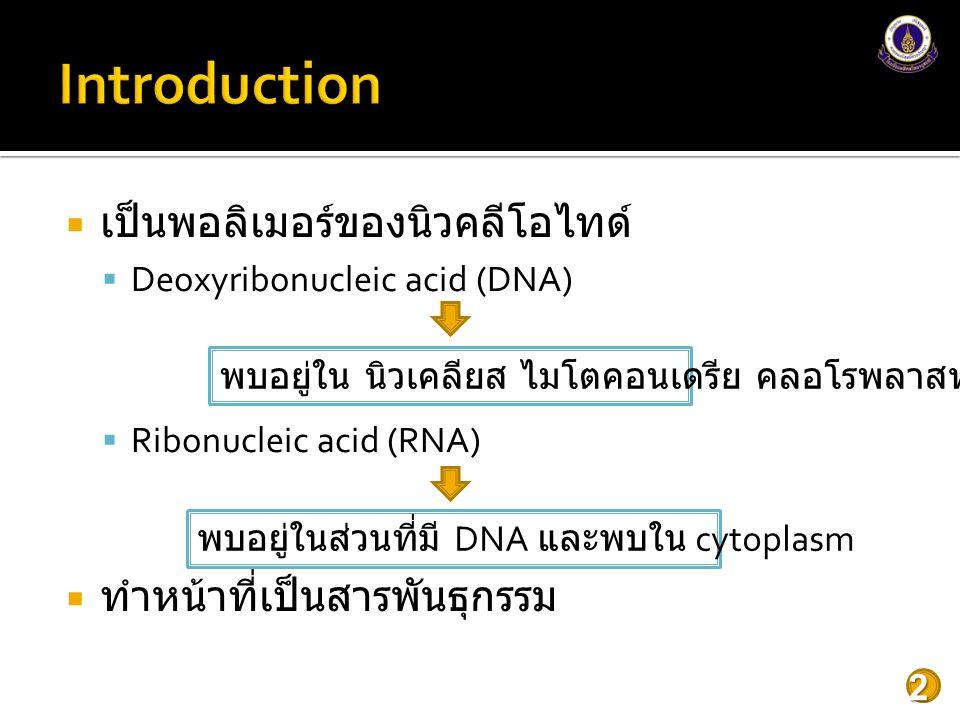  เป็นพอลิเมอร์ของนิวคลีโอไทด์  Deoxyribonucleic acid (DNA)  Ribonucleic acid (RNA)  ทำหน้าที่เป็นสารพันธุกรรม 2 พบอยู่ใน นิวเคลียส ไมโตคอนเดรีย คลอโรพลาสท์ พบอยู่ในส่วนที่มี DNA และพบใน cytoplasm