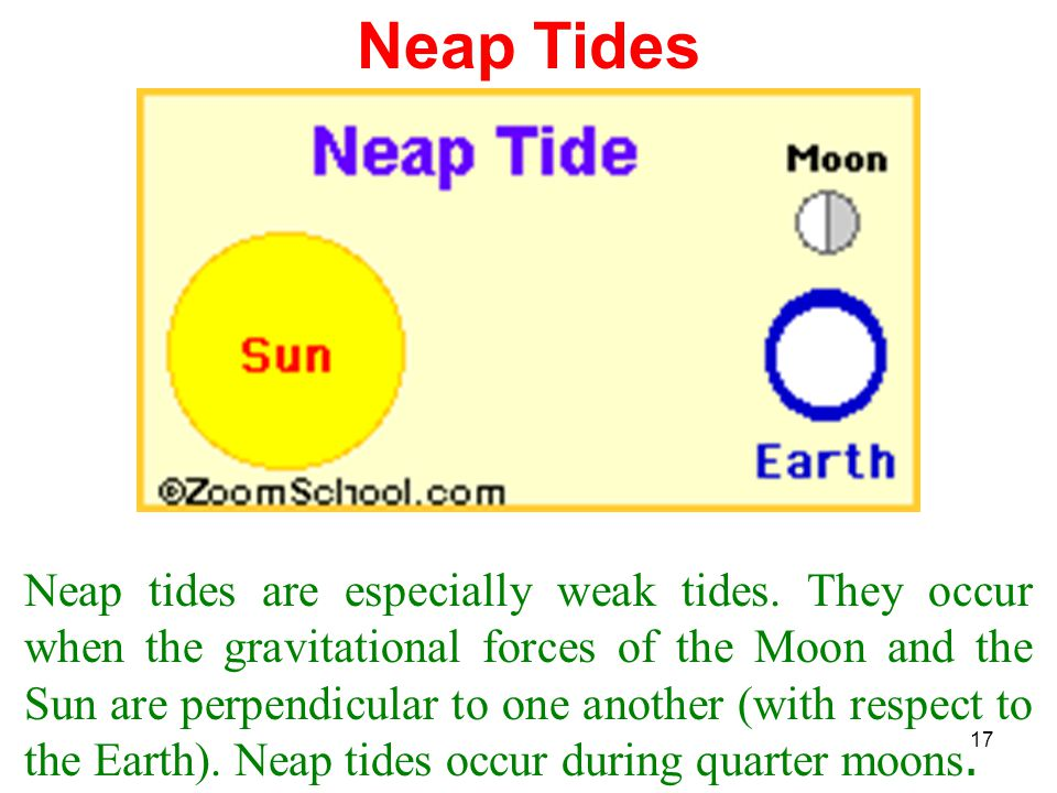 17 Neap Tides Neap tides are especially weak tides. They occur when the gravitational forces of the Moon and the Sun are perpendicular to one another
